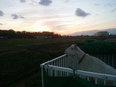 【写真】アランが小屋の中から夕暮れ風景を眺めているところ