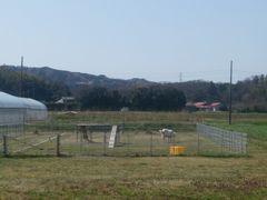 【写真】農園から眺める三舟山(手前のアランフィールドでは草を食べるアラン)