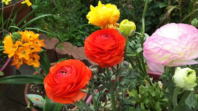 ミーママの実家のお花3