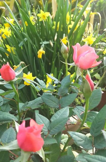 ミーママの実家のお花1
