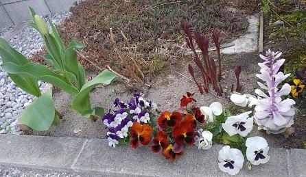 出迎えてくれた花