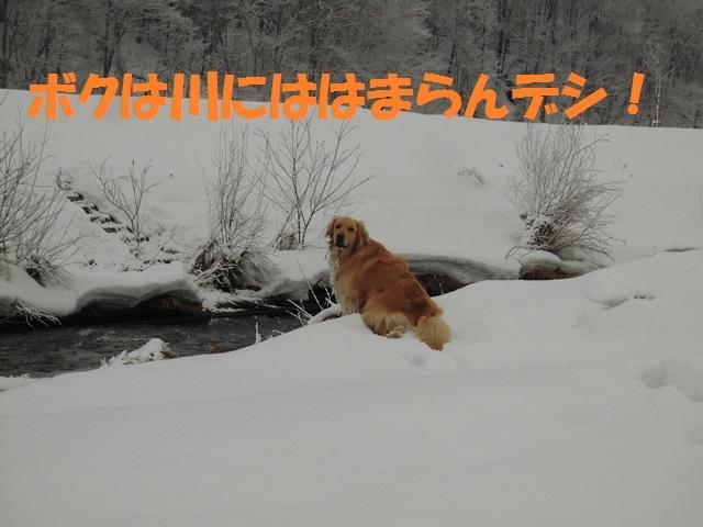 CIMG4551_P.jpg