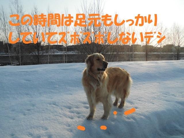 CIMG4587_P.jpg