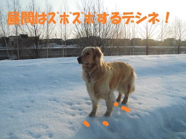 CIMG4588_P.jpg