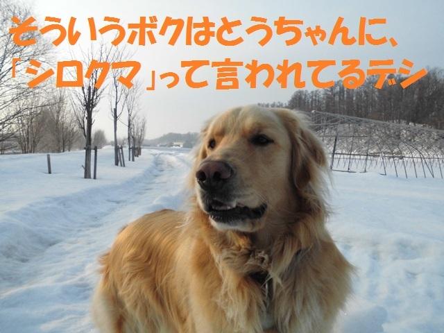 CIMG4602_P.jpg