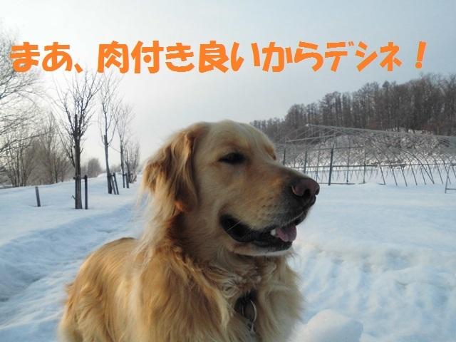 CIMG4604_P.jpg