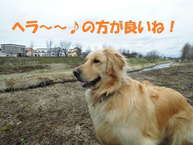 CIMG4733_P.jpg