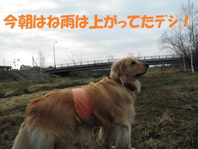 CIMG4764_P.jpg