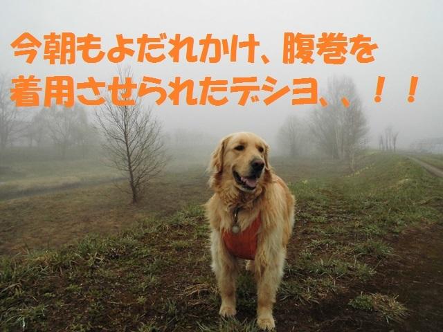 CIMG4778_P.jpg