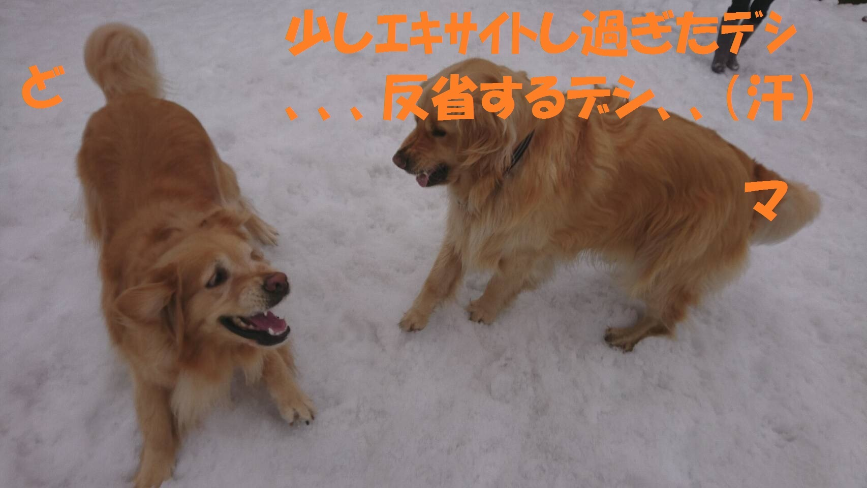 IMG_2410.jpg