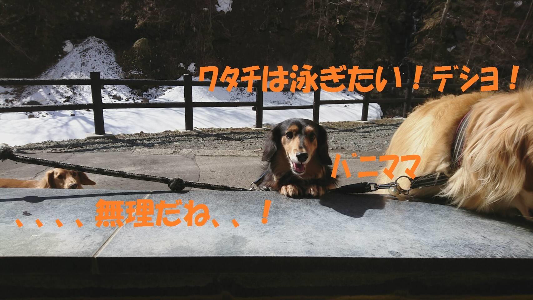 IMG_2941.jpg