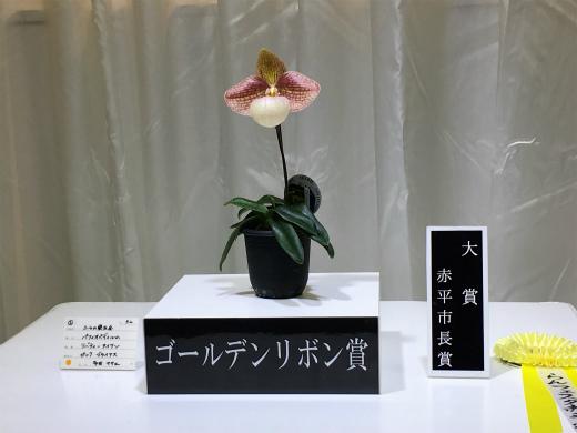 s-949-4大賞