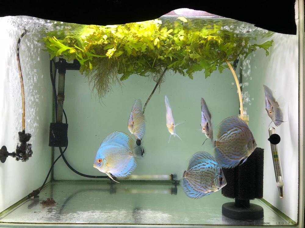 幼魚と稚魚と・・・
