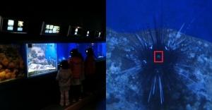 碧水族CO7-1