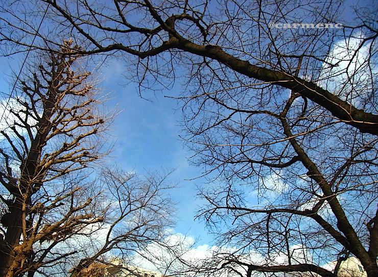 冬の青空と樹木