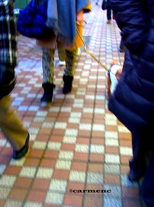 冬の舗道と犬