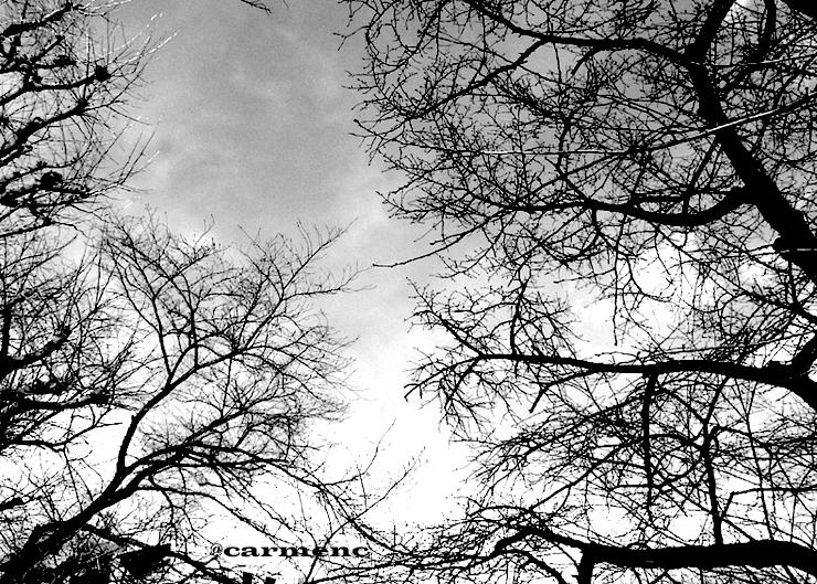 冬の空と樹木墨絵風