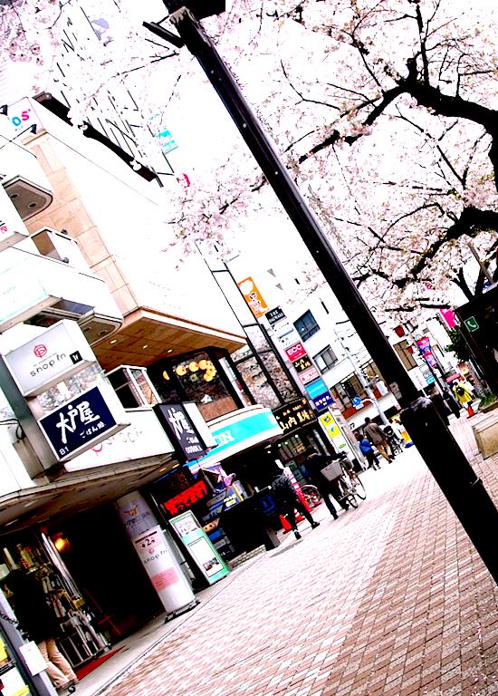 駅前大戸屋前桜と舗道