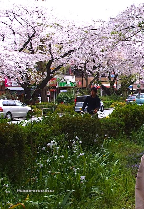 桜・自転車のイケメン男子