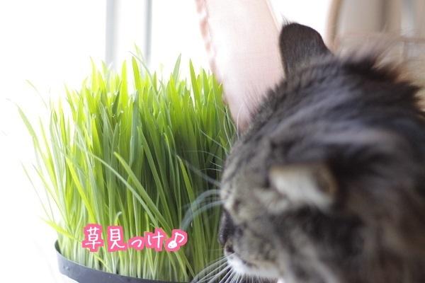 かくし草2
