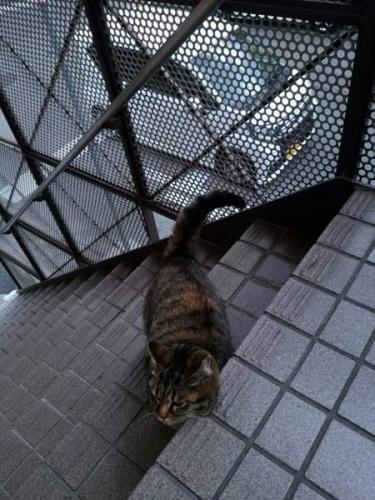 姉妹猫03