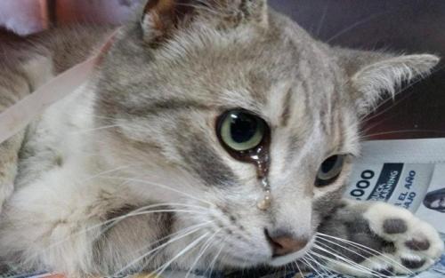 attack_cat02.jpg