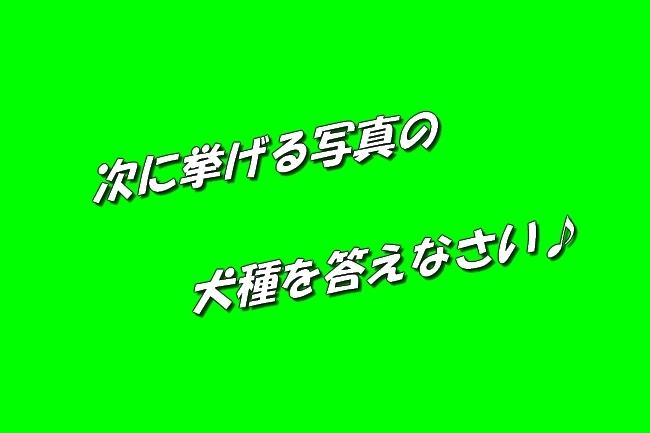 3_20170329221310bd3.jpg