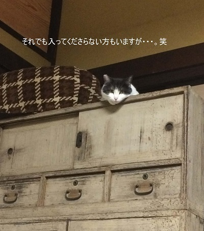 猫が思うように行かない件②