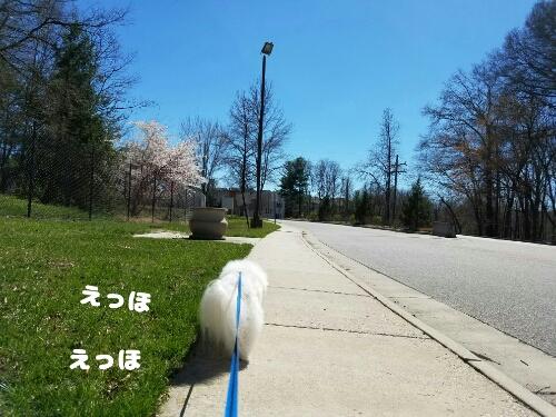 fc2_2017-03-30_09-23-35-319.jpg