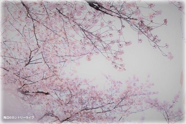 花*めぐり