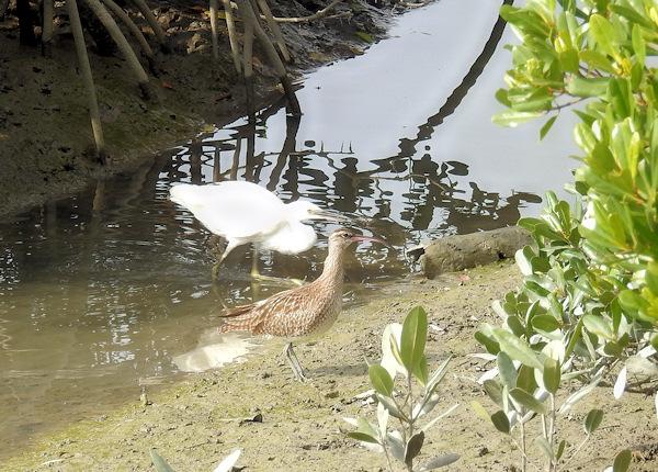 那覇の水鳥・湿地センターから
