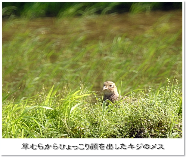 2017414kiji.jpg