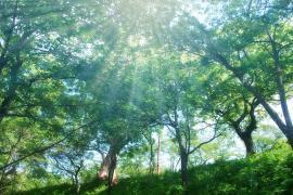 ヒプノセラピー スピリチュアルライフ 自然 光