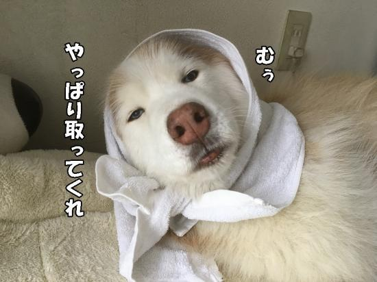 IMG_2983_convert_20170411175939.jpg