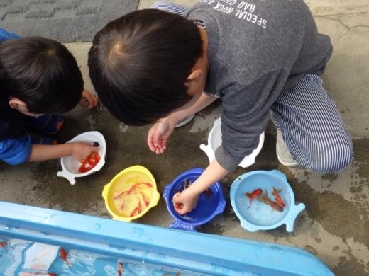 金魚が流行り (14)