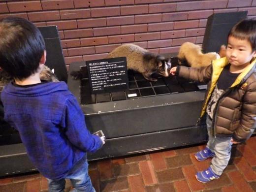 埼玉県立自然の博物館 (8)