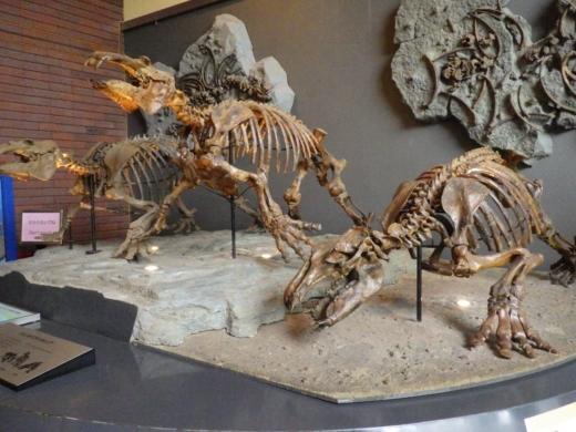 埼玉県立自然の博物館 (11)