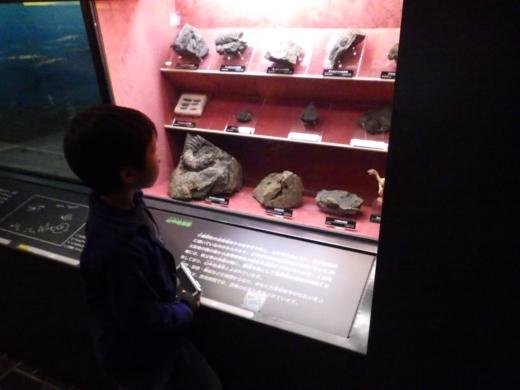 埼玉県立自然の博物館 (17)