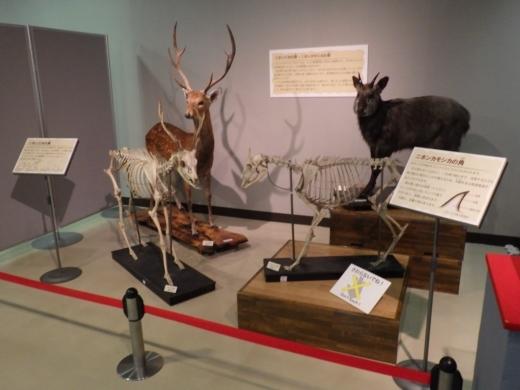 埼玉県立自然の博物館 (18)