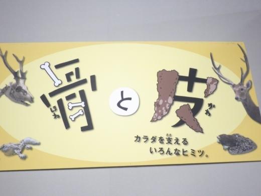 埼玉県立自然の博物館 (19)