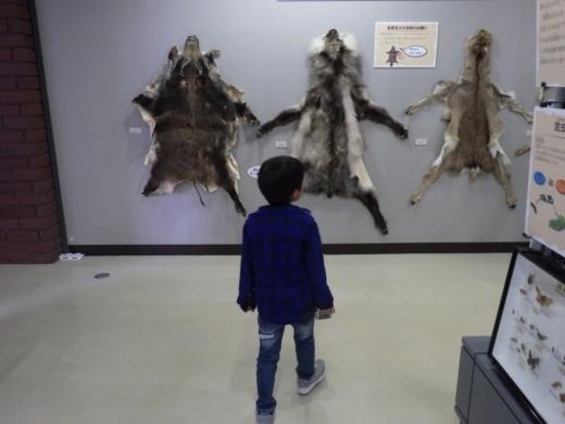 埼玉県立自然の博物館 (20)