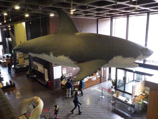 埼玉県立自然の博物館 (21)