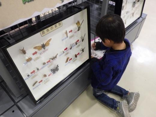 埼玉県立自然の博物館 (25)