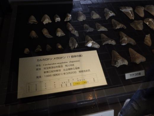 埼玉県立自然の博物館 (29)