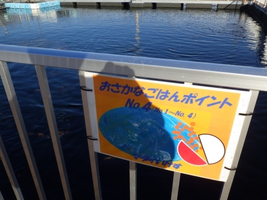 シーパラ釣り堀 (44)