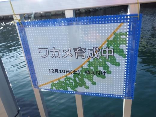 シーパラ釣り堀 (46)