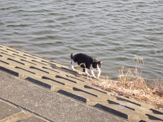 びん沼川の水門の方 (17)