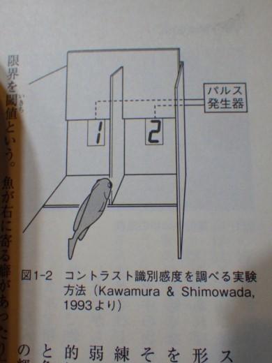 釣り入門 (3)