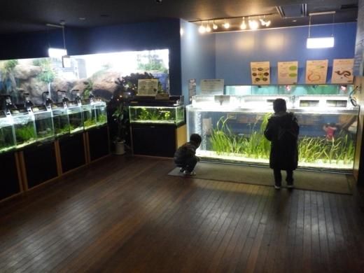 森の中の水族館 (15)