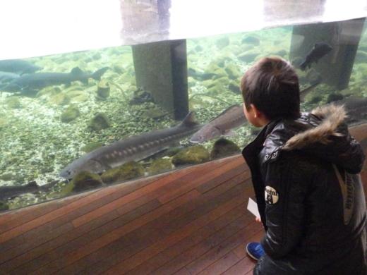 森の中の水族館 (16)